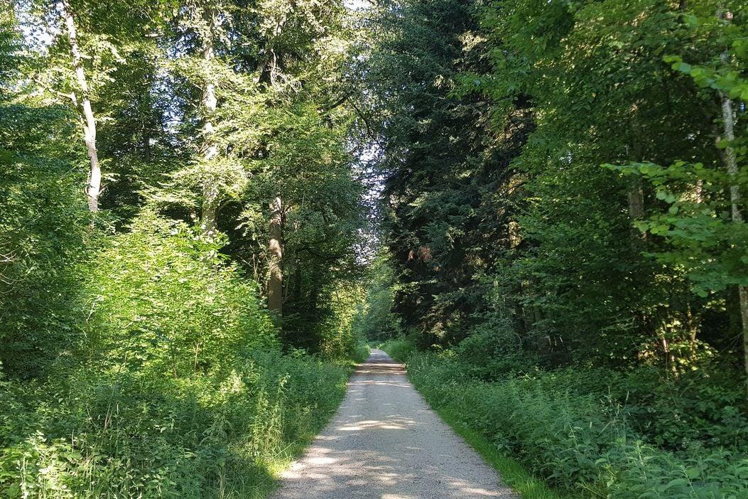 Spazieren und Joggen im Wald Niederlenz