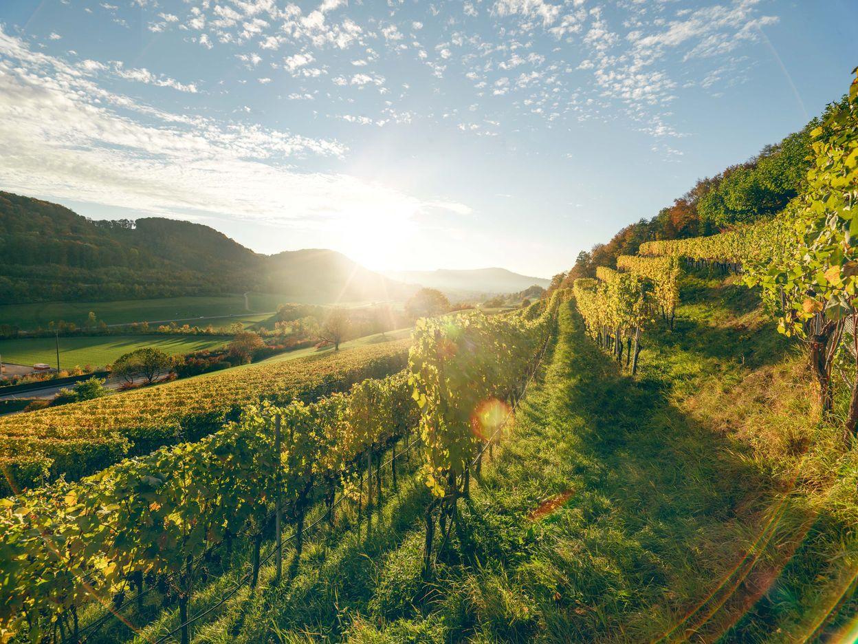 Weinerlebnisse im Aargau