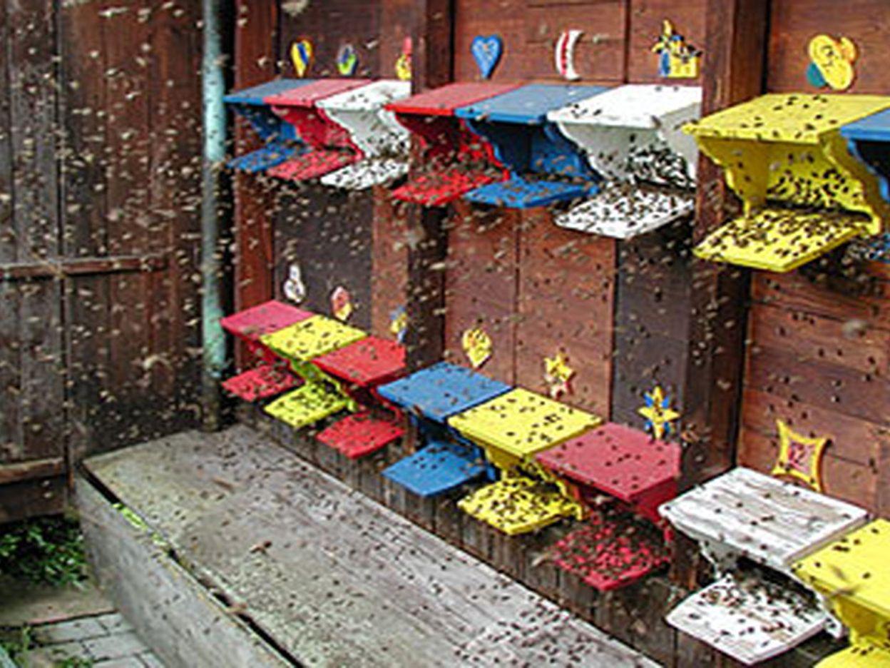 Schafisheim: Bee Trail